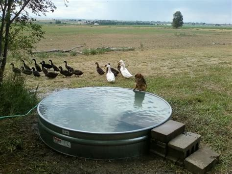 cheap backyard pools make your own stock tank pool homestylediary cheap swimming pools in the galvanized stock tank turned into a simple diy pool eco