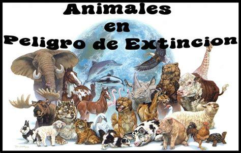 imagenes de animales nuevas especies animales en peligro de extinci 243 n del ecuador la extinci 211 n