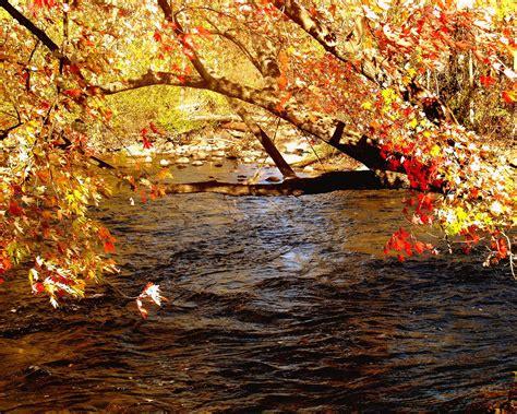 imagenes de otoño y primavera paisajes del oto 241 o