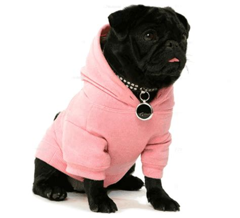 dogs 2 clothes 10 stylish and trendy clothes