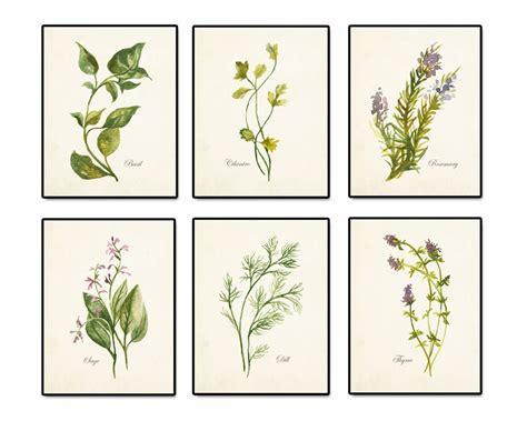 free printable herb poster watercolor herbs print set 2 botanical print giclee art