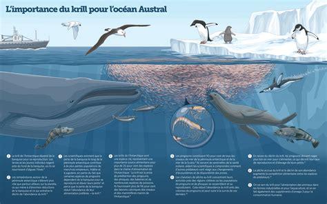 cadena alimenticia krill la protection des krills de l antarctique