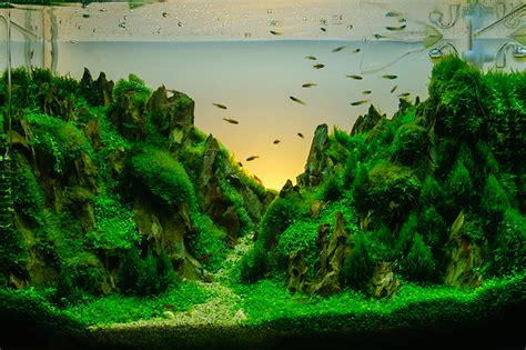 How to aquascape your fish tank   PetSpot