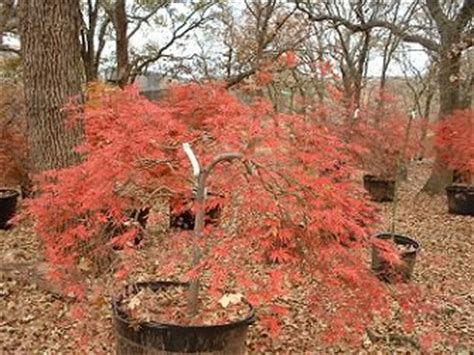 Maple Garden Great Falls by 17 Best Images About Lindsay S Backyard Garden Plan On