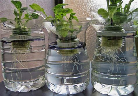 menanam bibit secara hidroponik  media air