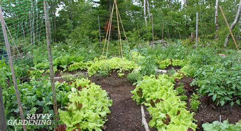 6 High Yield Vegetables High Yield Vegetable Garden