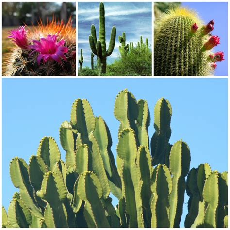 succulent facts catus facts that will challenge your knowledge fact