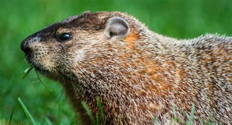 groundhog day kills himself groundhog day kills himself 28 images filming