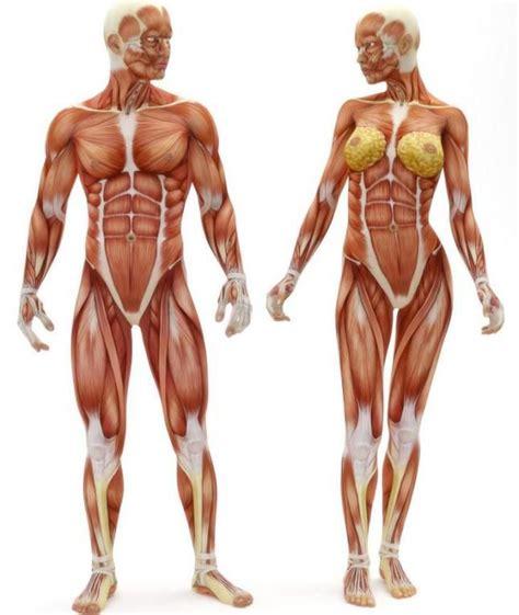 interior del cuerpo humano organos best 25 organos cuerpo humano ideas on pinterest
