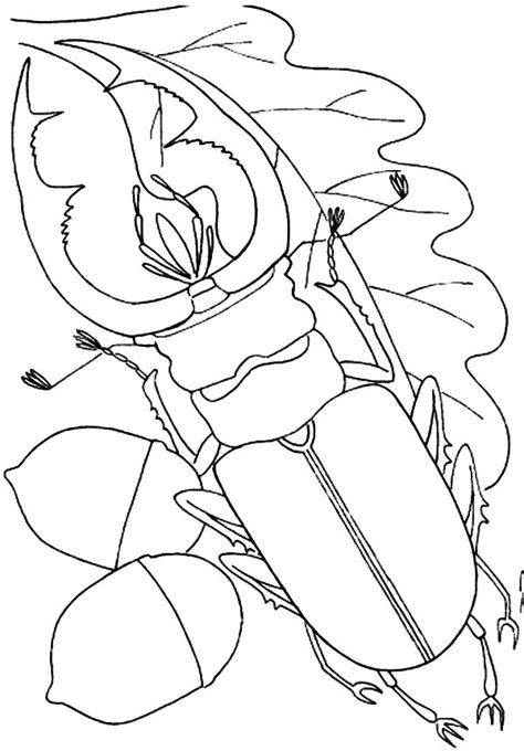 water bug coloring page 88 spotted cucumber beetle coloring page bug