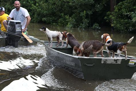 ark boat stuck on land louisiana flooding thousands of animals rescued from