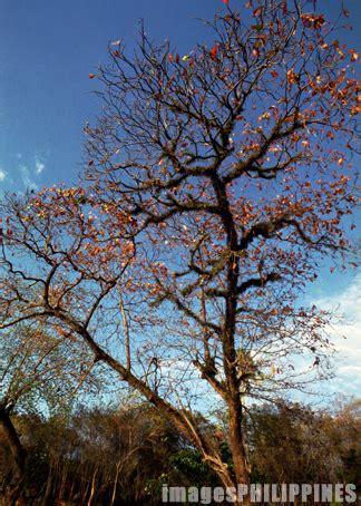 talisay tree place  samal island davao