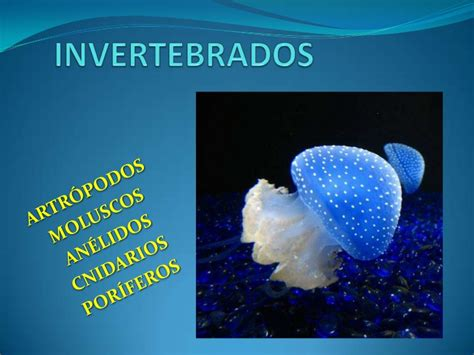 maqueta de animales invertebrados y vertebrados youtube invertebrados