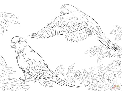 A Book Coloring Page Supercoloring Com | two quaker parrots coloring page free printable coloring