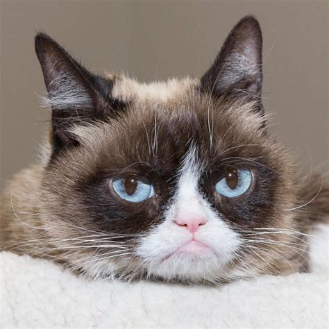 grumpy cat joins cats on grumpy cat to join the cast of cats cat daily news