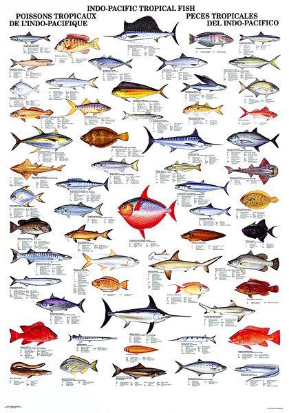 fishing names indo pacific fish fishing tips with fishbox fish fishing stuff and