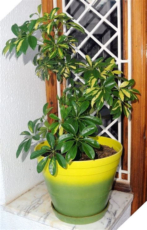 easy indoor plants 25 best easy house plants ideas on pinterest plants