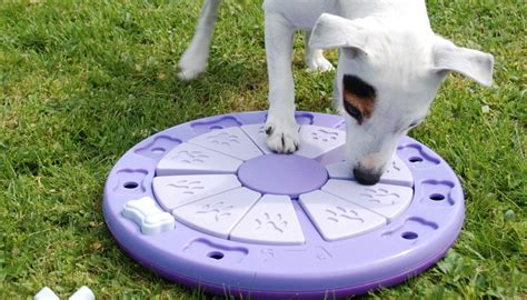 mental stimulation for dogs the importance of mental stimulation for your