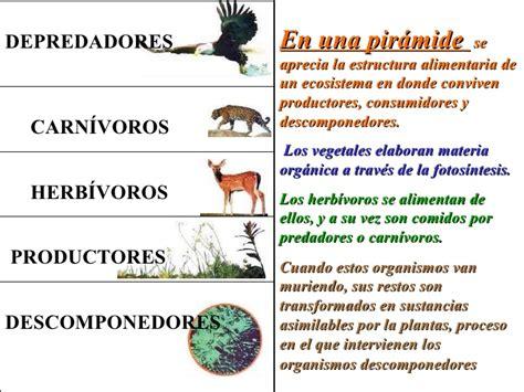 cadena alimenticia quienes son los productores ecosistemas2