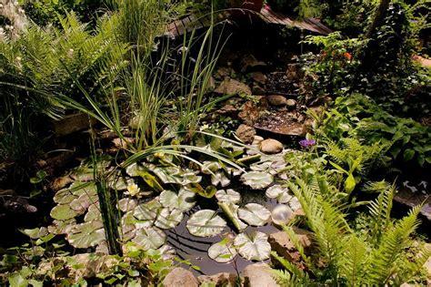 Garten Pflanzen Nicht Winterhart by Winterharte Farne Richtig Anpflanzen Garten Wissen