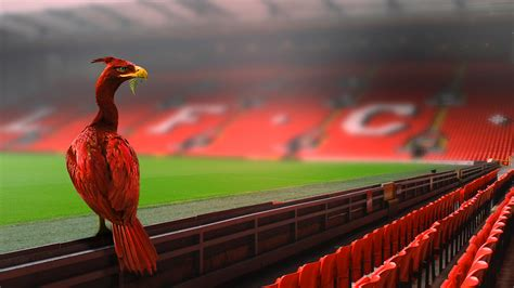 Liverpool Bird the real liverbird pt 2 anfield on behance