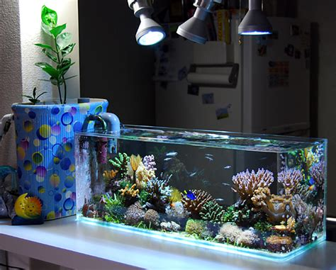 The Rise of Nano Tanks, A New Reason to Think Small News Reef Builders   The Reef and Marine