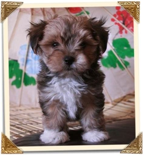 small mixed breed puppies 15 best images about doll puppies on dogs toys and ux ui designer