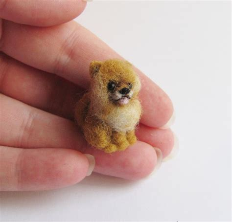 mini pomeranian info best 25 miniature pomeranian ideas on pomeranian puppy blue pomeranian