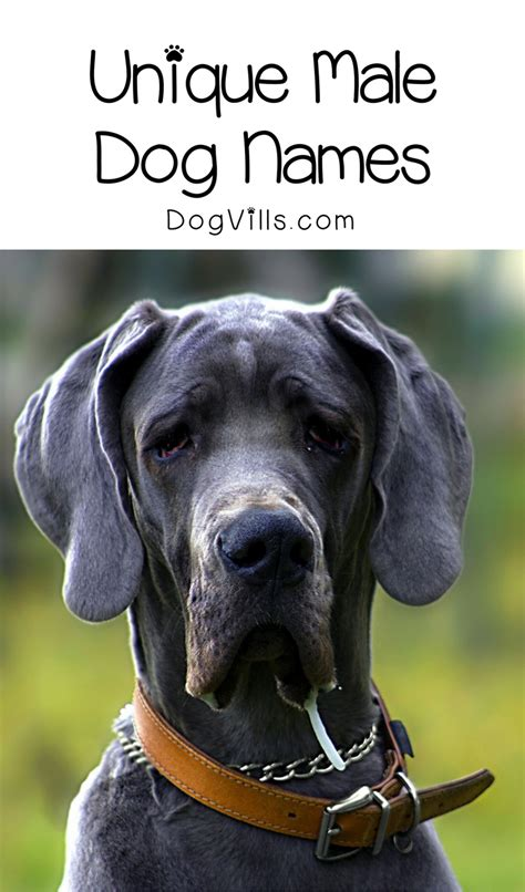 unique boy puppy names 6 incredibly unique names you ll dogvills