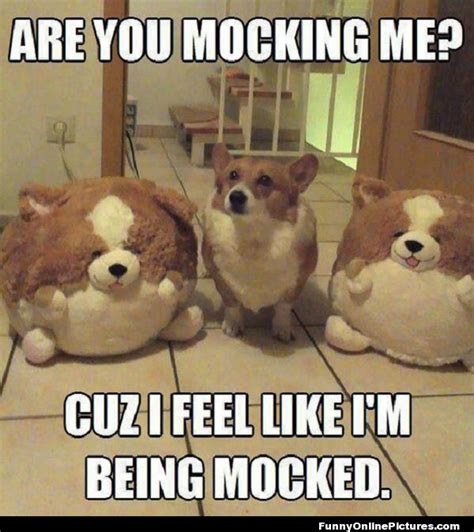 Funny Animal Memes Pictures - funny dog meme picture