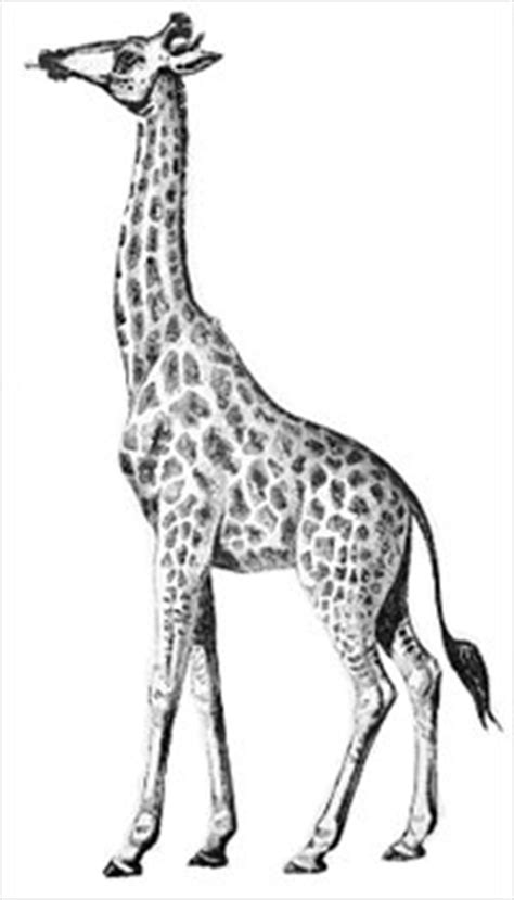 Free giraffe Clipart - Free Clipart Graphics, Images and