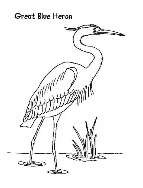 great blue heron coloring page animals town animal