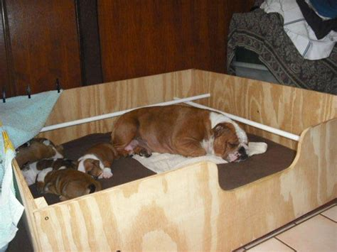 puppy whelping box bitchbox and pet enclosures