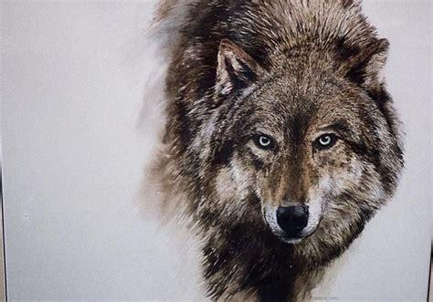 google images wolf tete loup profile dessin recherche google loups