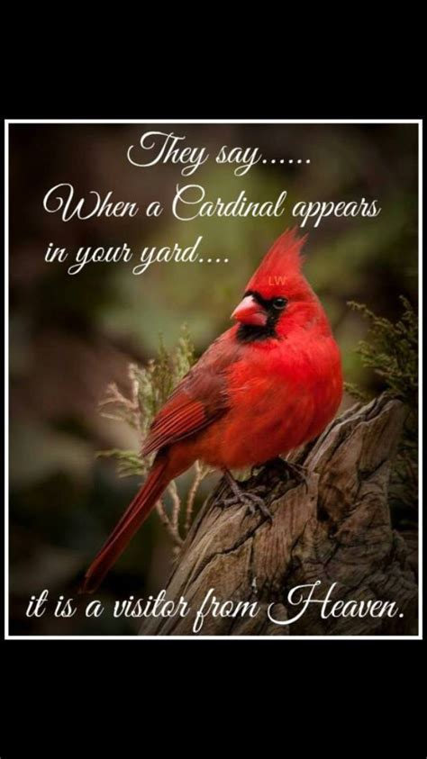 heavenly cardinal cardinals pinterest cardinals