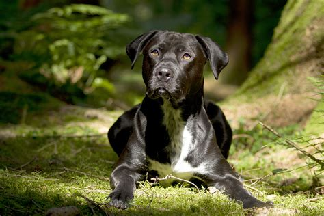 lyme disease dogs lyme disease in dogs symptoms risks and prevention petmeds 174 pet health