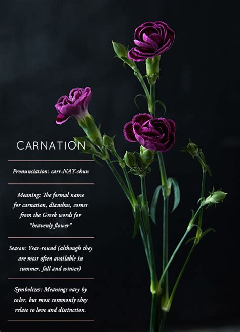 facts about carnations flower glossary carnation design sponge
