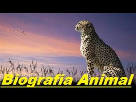 Biografia De Animal | biografia de chita o guepardo biografia animal youtube