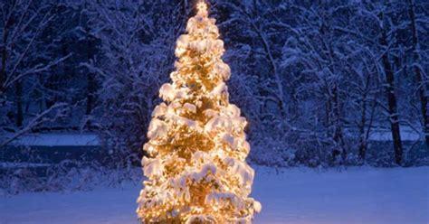 weihnachtsbeleuchtung garten weihnachtsbeleuchtung mein sch 246 ner garten