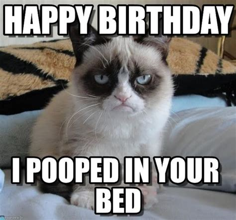 Sad Cat Meme - sad cat meme birthday image memes at relatably com