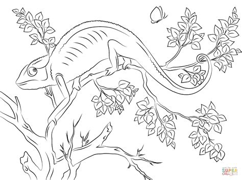 cute chameleon coloring page free printable coloring pages