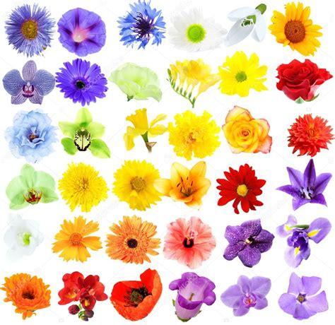 fiori bellissimi immagini fiori bellissimi collage foto stock 169 belchonock 75745481