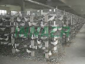 pigeon house design poultry farm pigeon house design iso9001 pony buy pigeon house pigeon house design