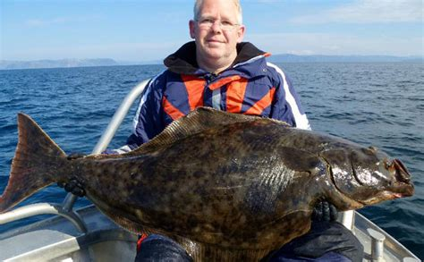 nordic sea angling boats excellent fishing report norway june sportquest