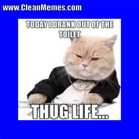 Meme S - cat memes clean memes the best the most online