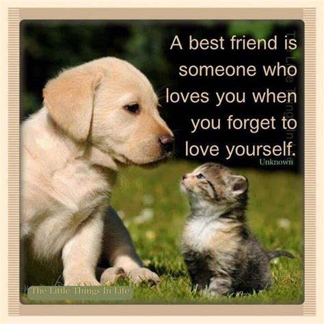 best friend pet animal best friend quotes quotes like pets dogs cats