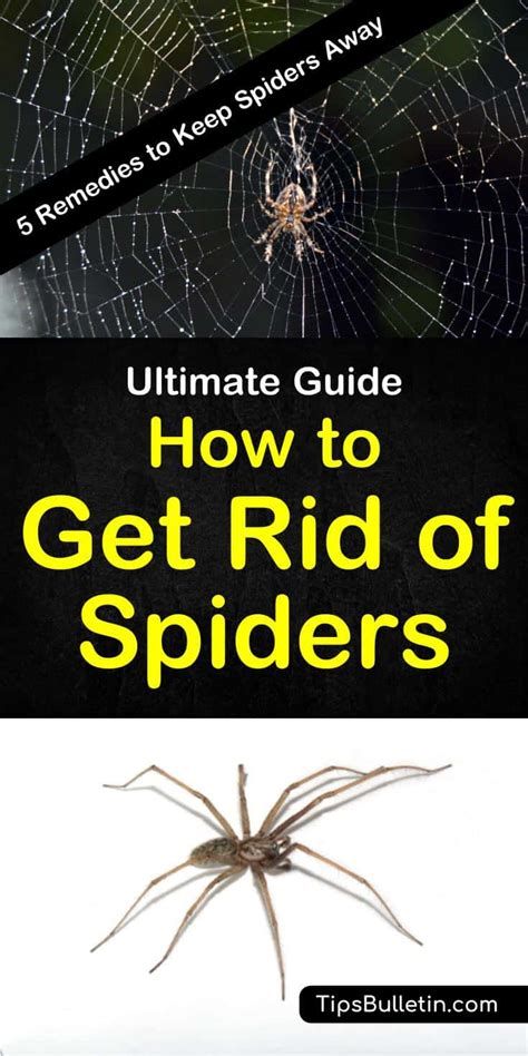 how to keep spiders out of the house how to get rid of spiders 5 remedies to keep spiders away
