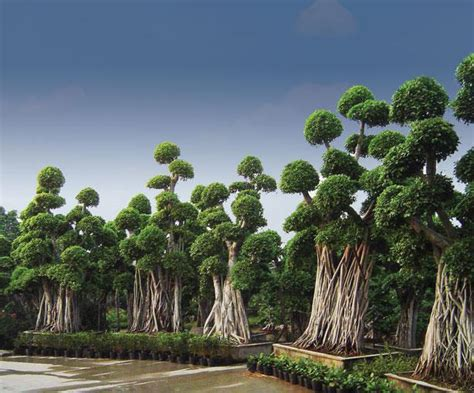 ramadugu ramdev rao hyderabad andhra pradesh india