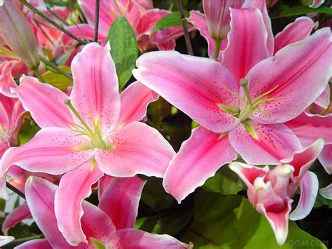 popular flowers top 10 most popular flowers to plant in your garden