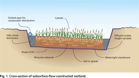 design criteria for constructed wetlands plants in constructed wetlands help to treat agricultural